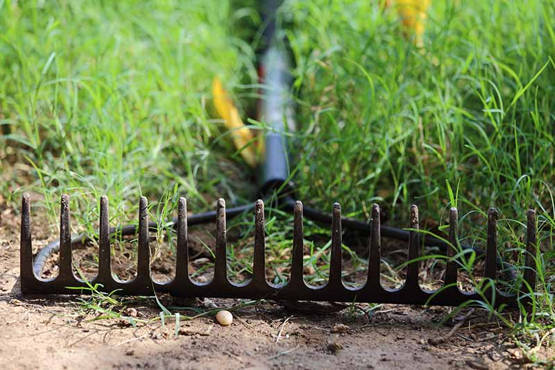 A close up horizontal image of a bow rake lying on the lawn.