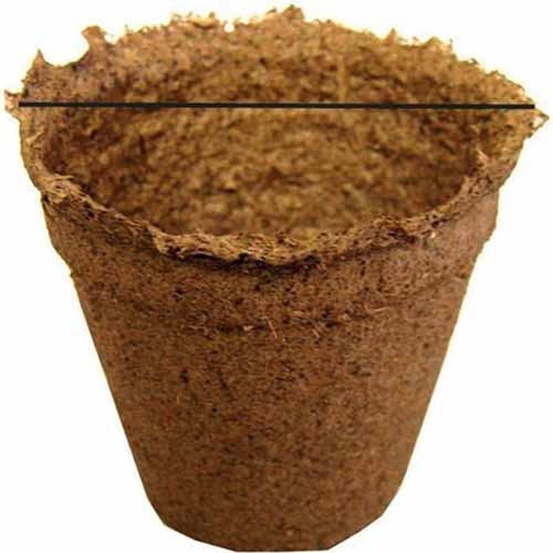 A close up square image of a biodegradable CowPot for seed starting isolated on a white background.