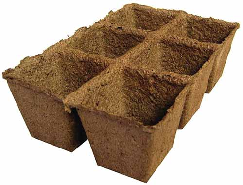 A close up horizontal image of CowPots, a biodegradable seed starting tray.