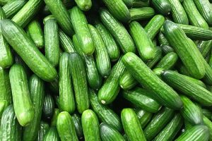 Cucumber Hollow Heart Causes and Solutions