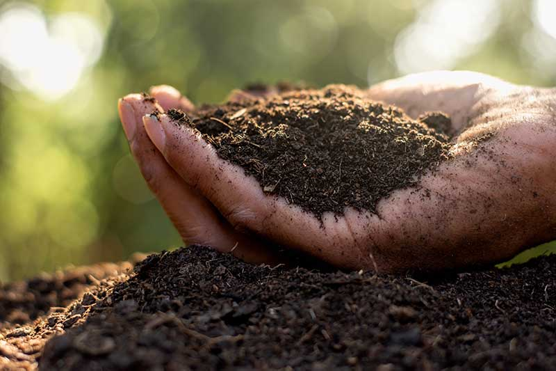 A close up horizontal image of a hand cupping rich dark soil pictured on a soft focus background.
