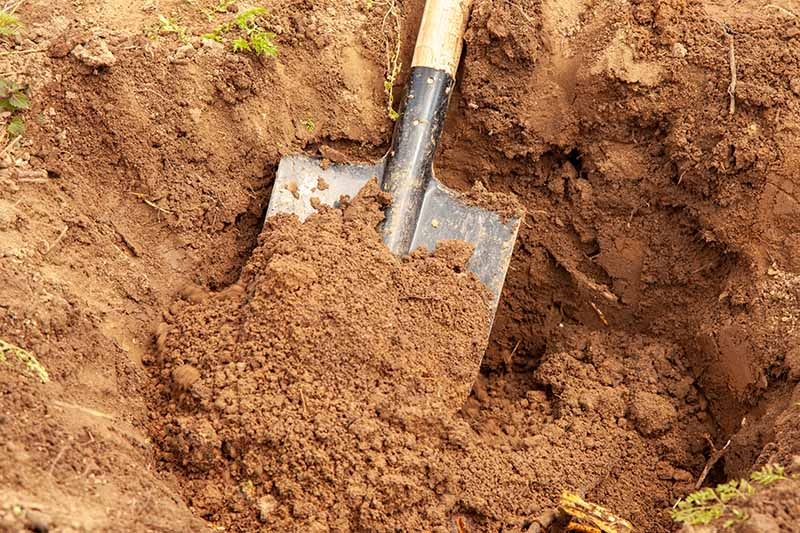 A close up horizontal image of a shovel being used to dig a large hole in the garden.