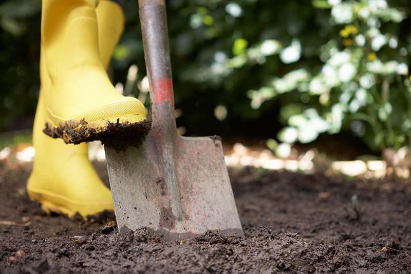A close up horizontal image of a yellow gumboot pushing a garden spade into dark rich soil.