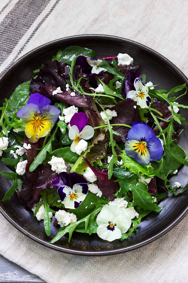 A close up vertical image of a dark plate of salad decorated with edible flowers.