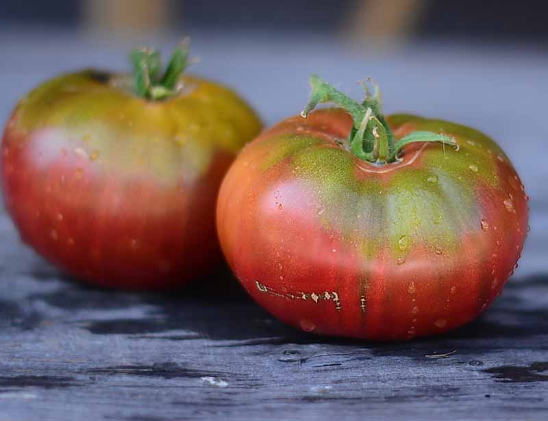 A close up horizontal image of two 'Cherokee Purple' tomatoes, freshly harvested and set on a wooden surface.