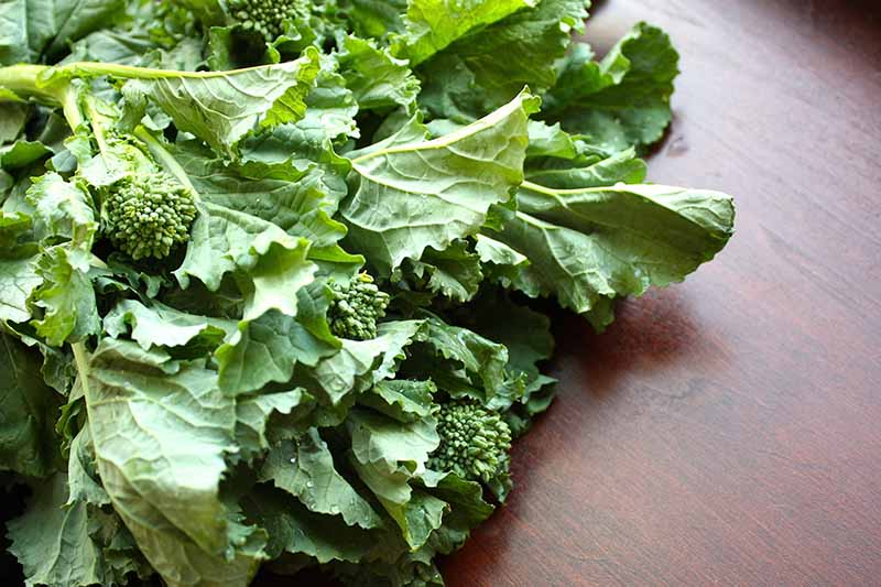 A close up horizontal image of a bunch of rapini set on a wooden surface.