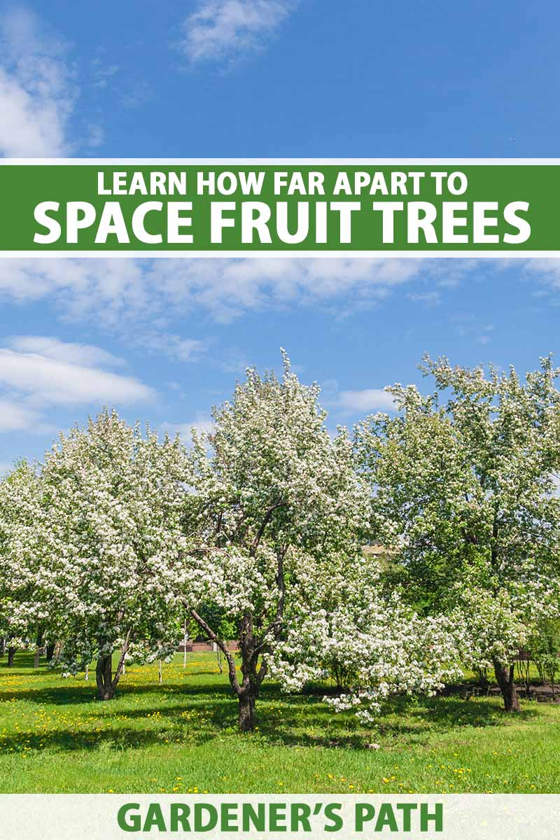 A vertical image of a backyard orchard with well-spaced fruit trees pictured on a blue sky background. To the top and bottom of the frame is green and white printed text.