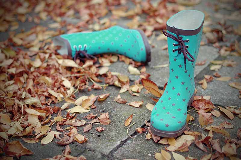 A close up horizontal image of blue gardening boots on a pathway surrounded by fallen leaves.