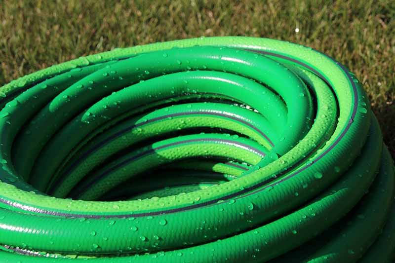 A close up horizontal image of a green coiled up hose set on the lawn covered in droplets of water.