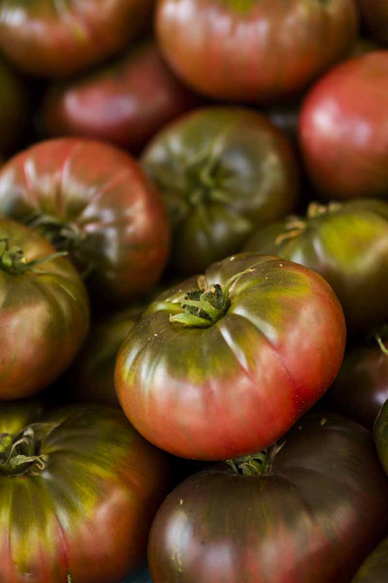 A close up vertical image of a pile of ripe 'Cherokee Purple' tomatoes fading to soft focus in the background.