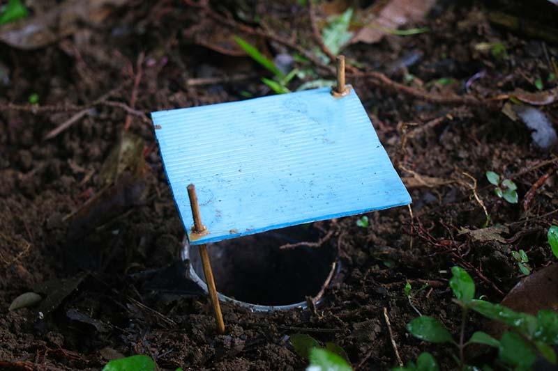 A close up horizontal image of a homemade trap in the ground to catch grubs and slugs.