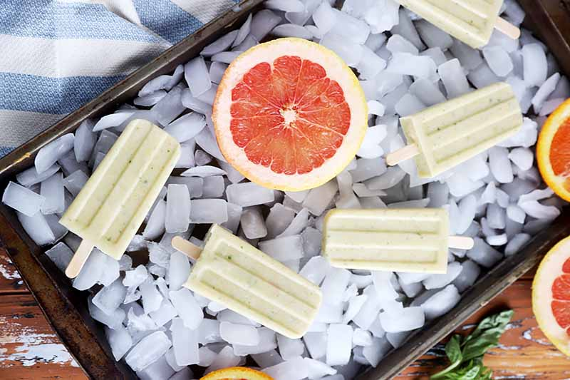 A close up horizontal image of a tray filled with ice and honey popsicles and a half of grapefruit.