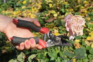 How to Deadhead Blooming Plants in the Garden