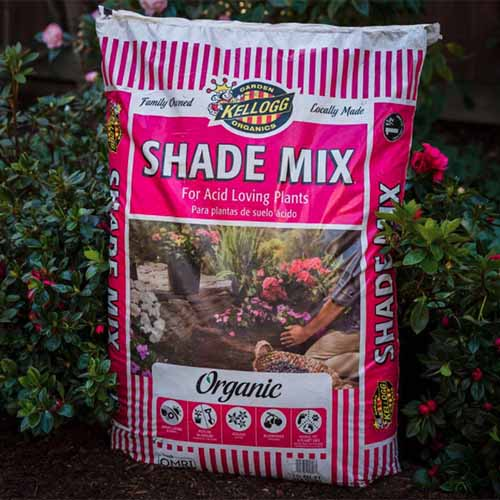 A close up square image of a bag of Kellogg Garden Organics Shade Mix for Acid Loving Plants set in front of shrubs in the garden.