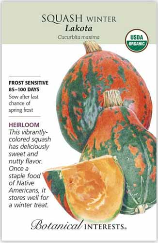A close up vertical image of a seed packet of 'Lakota' squash with text to the left of the frame and a hand-drawn illustration to the right.