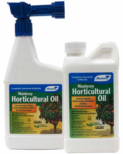 A close up square image of two bottles of Monterey Horticultural Oil isolated on a white background.