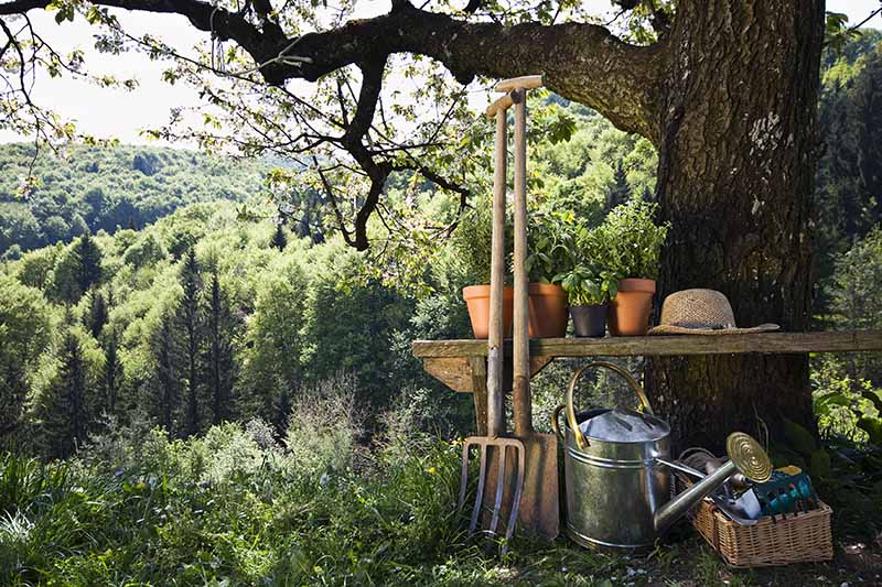 A horizontal image of gardening tools underneath a tree with trees in the background.
