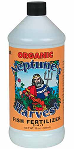 A close up vertical image of a bottle of Organic Neptune's Harvest Fish Fertilizer isolated on a white background.