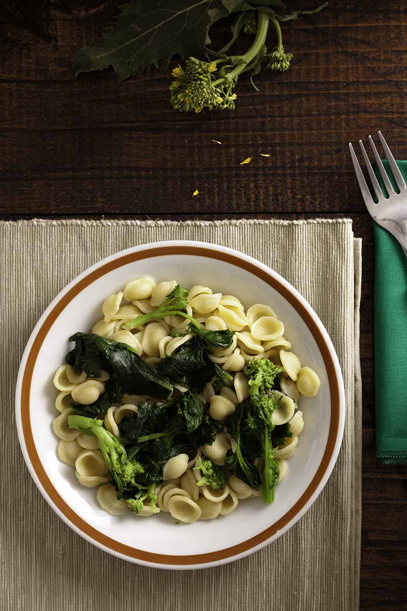 A close up vertical image of a traditional Italian dish, Orecchiette pasta with rapini.