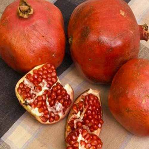 A close up square image of whole and split 'Red Silk' pomegranates on a wooden surface.