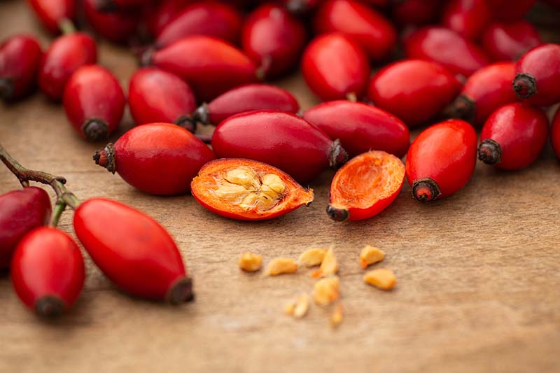 A close up horizontal image of freshly picked rose hips with one cut in half to reveal the seeds inside.