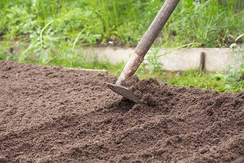 A close up horizontal image of a hoe spreading soil in the vegetable garden.