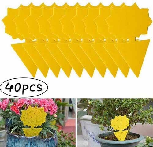 A close up square collage of three images of yellow sticky traps for placing in plant pots or out in the garden.