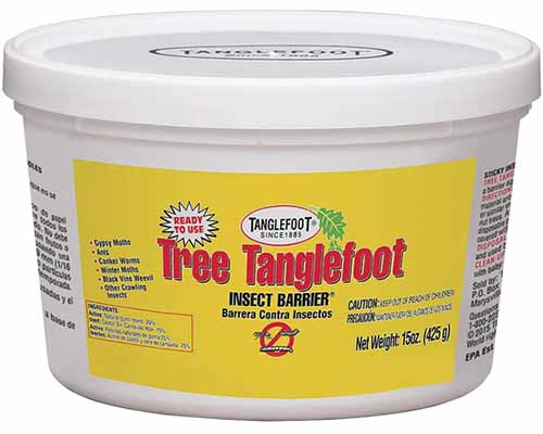 A close up horizontal image of a tub of Tree Tanglefoot Insect Barrier isolated on a white background.