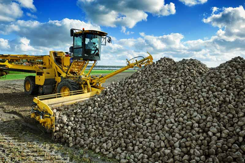 A horizontal image of a commercial harvester moving a large pile of harvested sugar beets, pictured on a blue sky background.