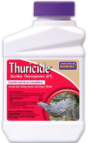 A close up vertical image of the packaging of Bonide Thuricide isolated on a white background.
