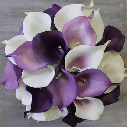 A close up square image of purple and white Zantedeschia flowers in a bouquet pictured on a gray background.