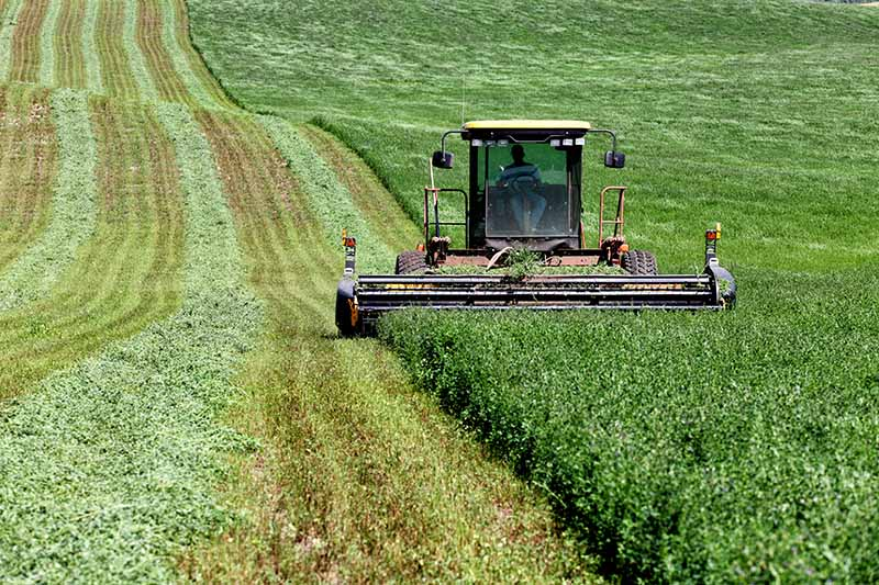 A horizontal image of a farmer cutting alfalfa in a commercial field with a tractor.
