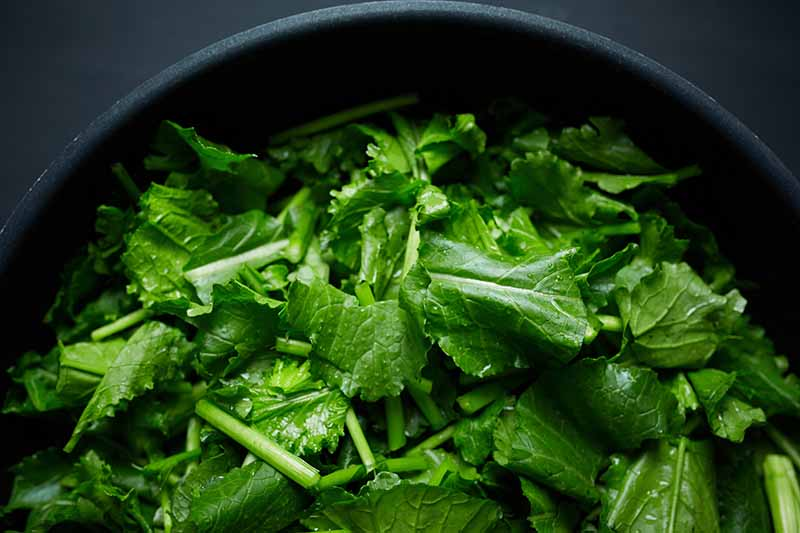 A close up horizontal image of chopped turnip greens cooking in a metal pan.