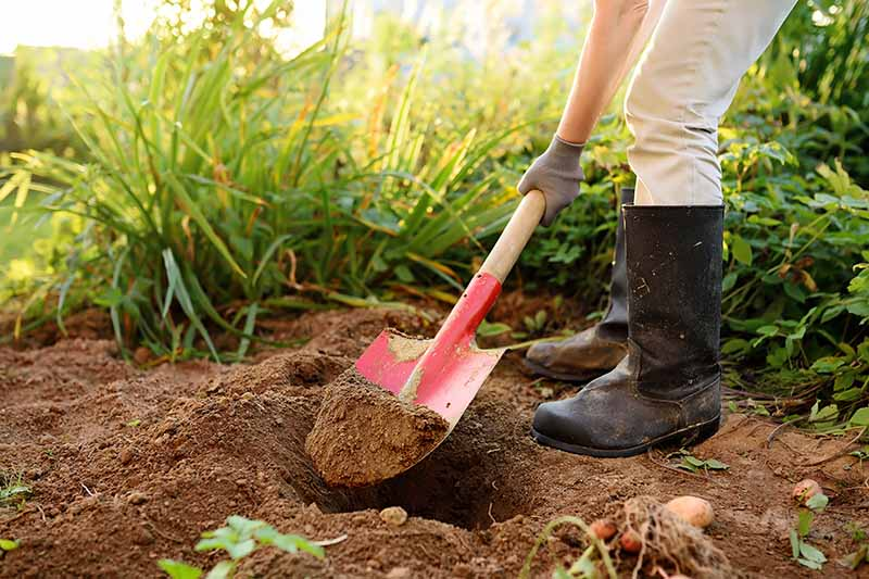 A close up horizontal image of a gardener using a shovel to dig a hole in the garden.