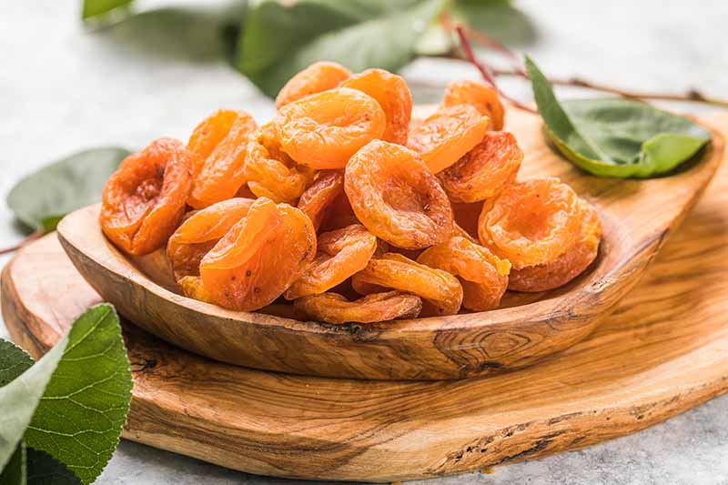 A close up horizontal image of a wooden bowl with a pile of ripe partially dried apricots pictured on a soft focus background.
