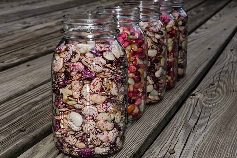 A close up horizontal image of jars of dried lima beans set on a wooden surface.