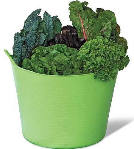 A close up square image of a flexible tubtrug filled with freshly harvested vegetables.