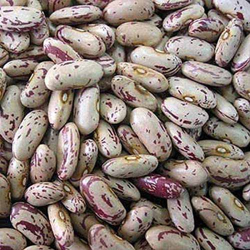 A close up square image of 'Florida Speckled' butterbeans in a pile.