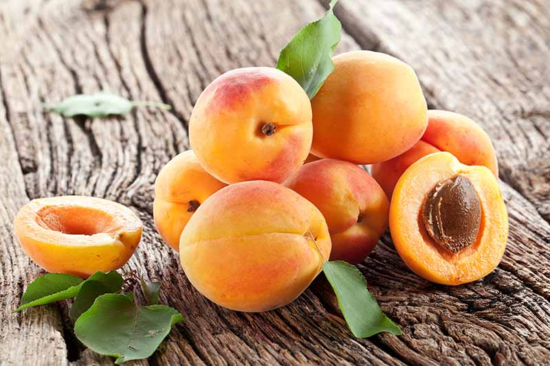 A close up horizontal image of a cluster of apricots both whole and cut in half set on a wooden surface.