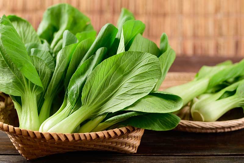 A close up horizontal image of two wicker baskets filled with freshly harvested pak choi set on a wooden surface.