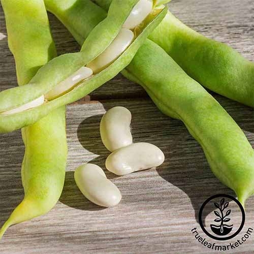 A close up square image of pods of 'Henderson' lima beans set on a wooden surface. To the bottom right of the frame is a black circular logo with text.