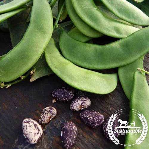 A close up square image of 'Jackson Wonder' beans and pods set on a wooden surface. To the bottom right of the frame is a white circular logo with text.