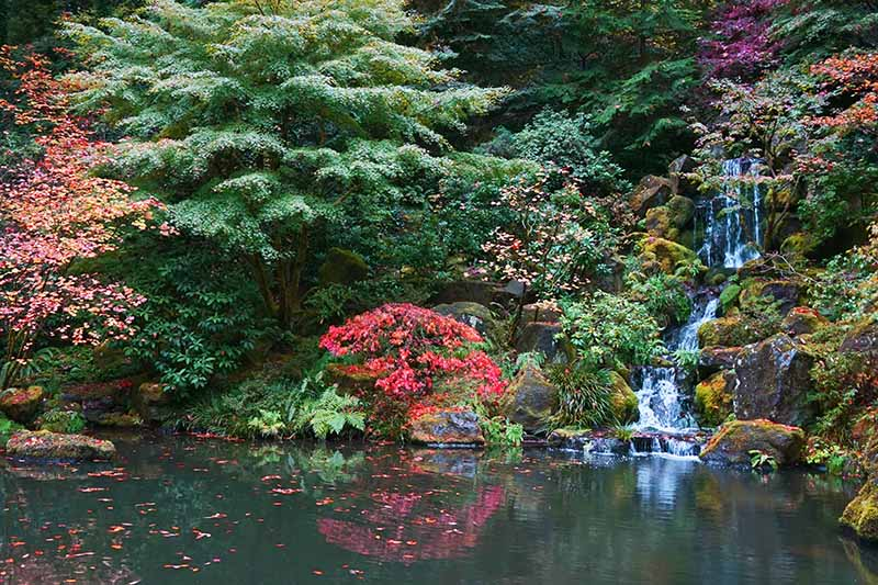 A horizontal image of a formal Japanese garden with a water feature and colorful plantings in Portland, Oregon.
