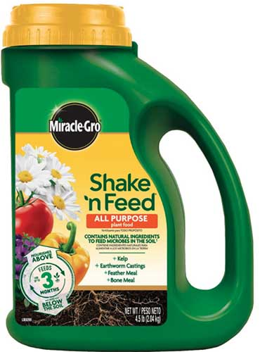 A close up square image of the packaging of Miracle-Gro Shake'n'Feed fertilizer isolated on a white background.