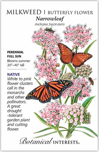 A close up vertical image of a seed packet of narrowleaf milkweed with text to the left of the frame and a hand-drawn illustration to the right.