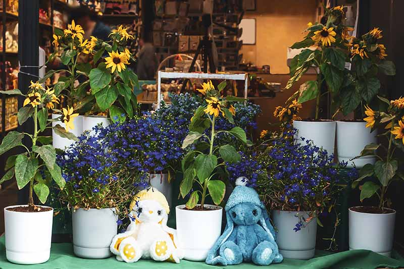 A horizontal image of a shop window with soft toys and flowers in pots.
