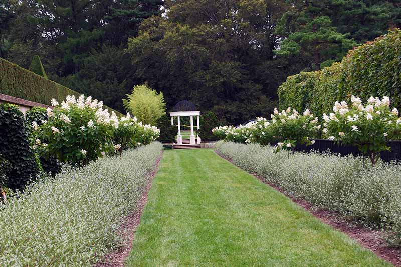 A horizontal image of a formal garden flanked with borders of tree hydrangeas.