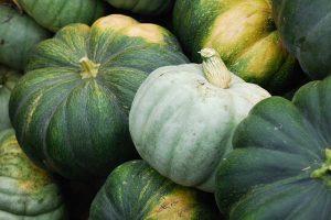 How to Turn Green Pumpkins Orange After Vines Die