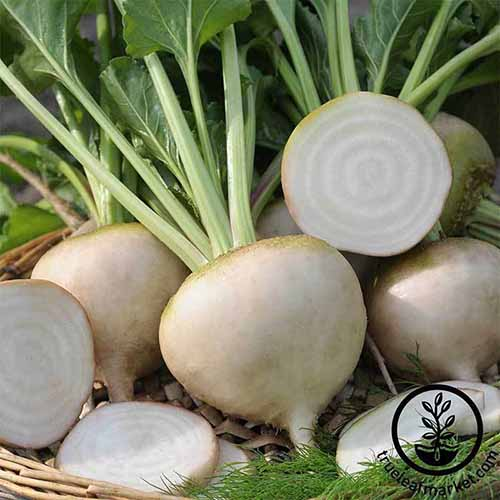 A close up square image of whole and sliced 'White Detroit' beets. To the bottom right of the frame is a black circular logo with text.
