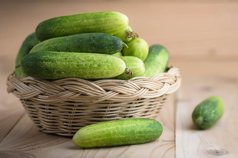 A close up horizontal image of a pile of cucumbers in a wicker basket set on a wooden surface.